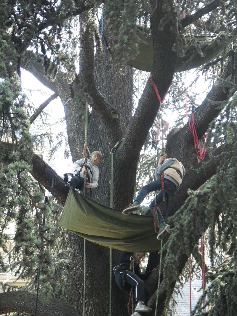Enfants branches1