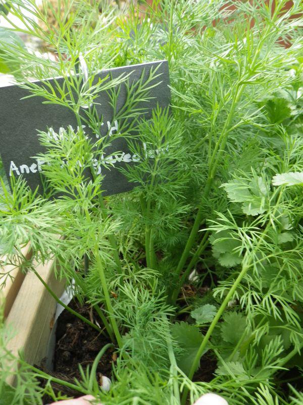 Dani 232 Le Festy Des Herbes Aromatiques Un Potager Et Des
