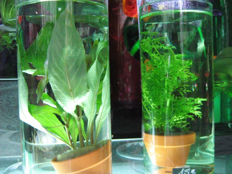 Plante aquatique1