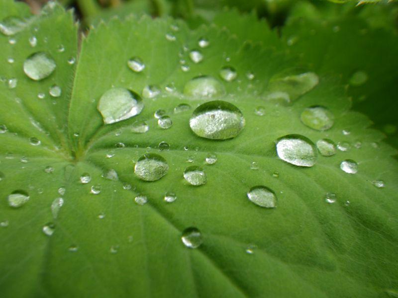 Goutte eau feuille chlorophylle