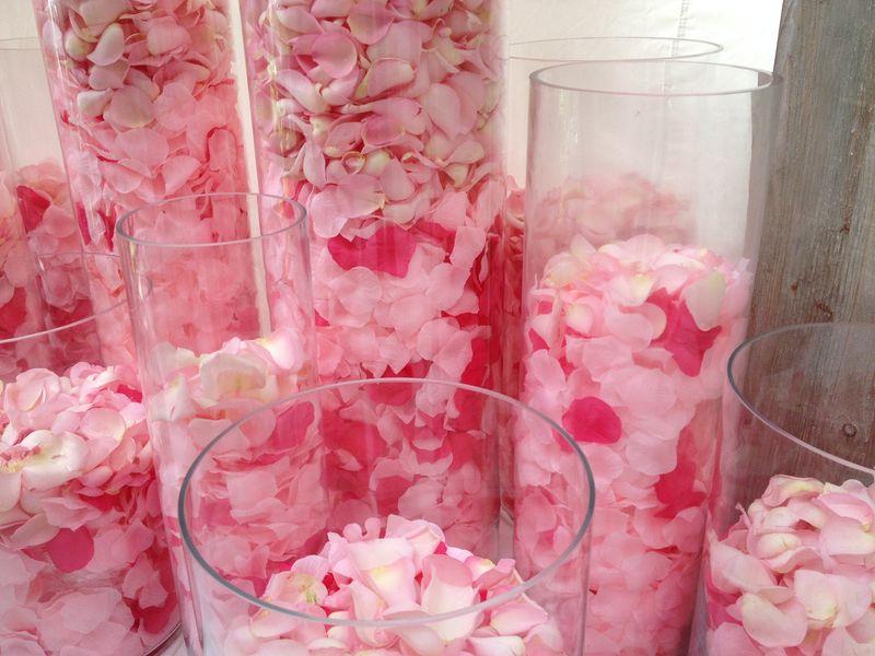 Pétales roses (6)