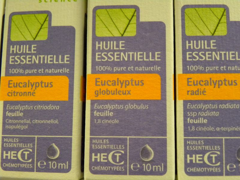 3 eucalyptus