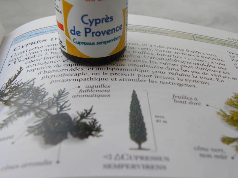 Cyprès2